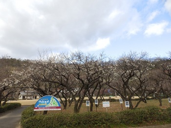梅林公園広角P2010044.JPG